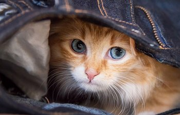 How To Get A Cat To Come Out Of Hiding?