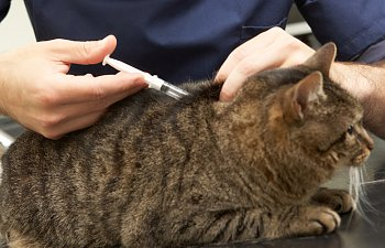 Cat Vaccinations: A Quick & Useful Guide