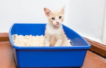 How Many Litterboxes Should You Have?