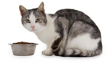 Transitioning Your Cat From Kibble To A New Type Of Food (canned, Raw, Or Homemade)