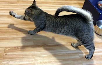 19 Funny Cats That Will Teach You How To Stretch Properly