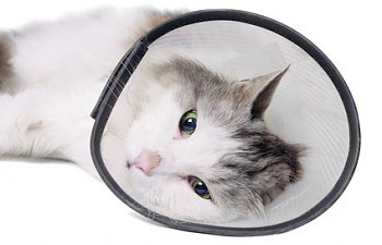 Spaying And Neutering - What To Look For After Surgery