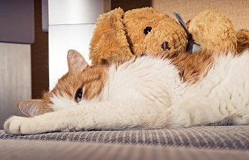 Do Cats Mourn?