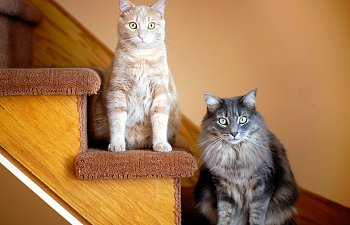 Your Second Cat: How To Choose The Best Friend For Kitty