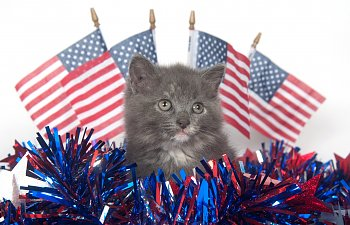 17 Cool Trivia Facts About American Cats