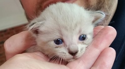 2 Week Old Feral Kitten With Eye Discharge Thecatsite