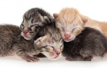 newborn-kittens-time.jpg
