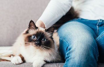 Selecting The Best Pet Sitter