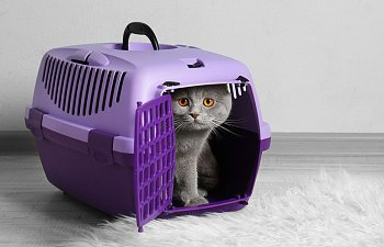 9 Tips That Will Help Your Kitten Adapt To A New Apartment