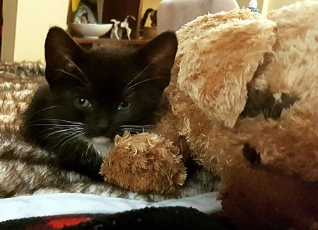 Feline Toy Story: 33 Cats That Show You What They Do With Toys