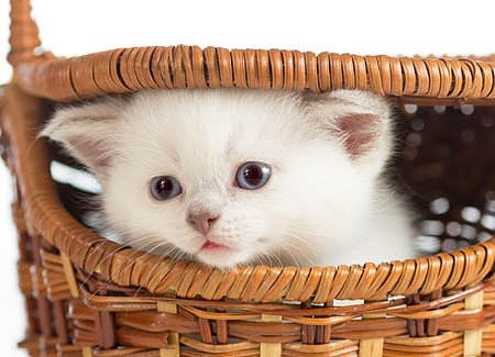 Kitten Proofing Your Home: 13 Practical Tips