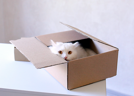 Renting With A Cat? Find Out How To Keep Your Landlord Happy