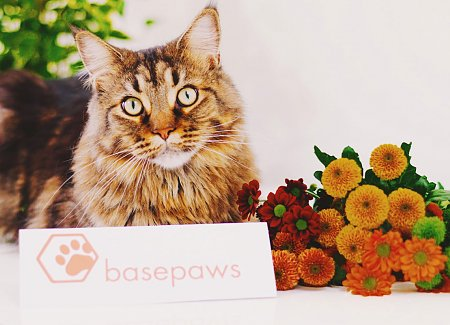 Discover Your Cat's Genetic Makeup With Basepaws