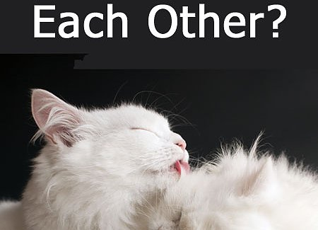why-cats-groom-each-other.jpg