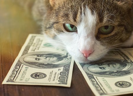 How Much Does It Cost To Get A Cat Fixed