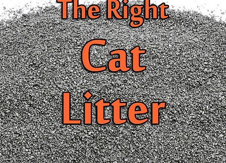How To Choose The Right Cat Litter Thecatsite