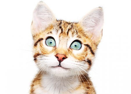 Why Do Cats...? The Ultimate Guide To Feline Behavior