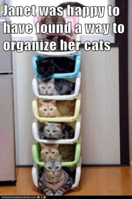 janet-was-happy-to-have-found-a-way-to-organize-her-cats.jpeg