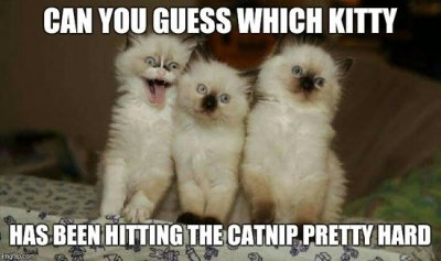 can-you-guess-which-kitty-meme.jpg