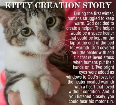 kittencreationmyth.jpg
