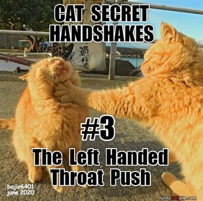 cat-secret-handshakes-3.jpg