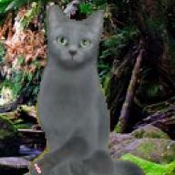 Warriorcat Kitty