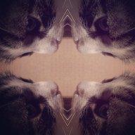 skrinkle