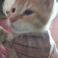 Phoenix_The_Cutie_Cat=3