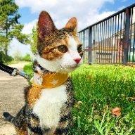 Ori's Meowmy