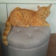 Pixelated Cat
