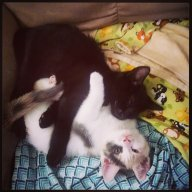 twocats_onelove