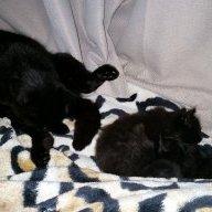 Cat_mom_casey