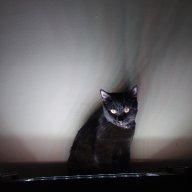 MeowHiss
