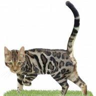 Wonderfulcat