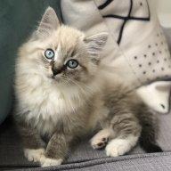 Catlady530