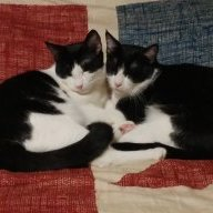Kittykat1998