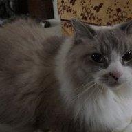 Catlover772