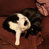 Tik cat's mum