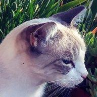 kommunity kats