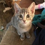 KittenKrazy