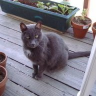 greycat2