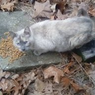 catspaw66