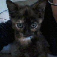 catgirl28