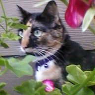 catsnip