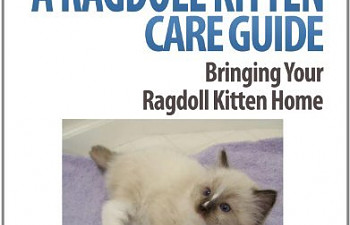 a ragdoll kitten care guide bringing your ragdoll kitten home