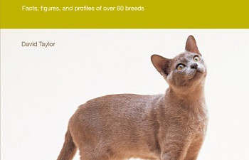 Abyssinian Cat Breed Profile (Your Cat Magazine Breed Profiles Book 1)