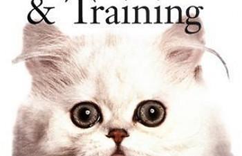 kittens for sale oregon