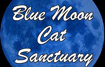 Blue Moon Cat Sanctuary Witter Ar
