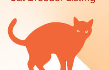 Siamese Cat Breeders | TheCatSite