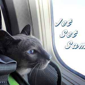 Cats on Airplanes